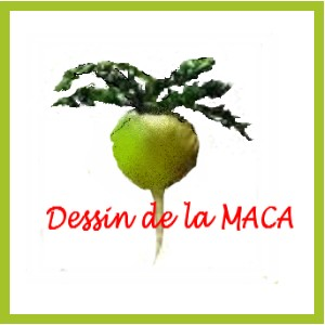 Maca complements alimentaire